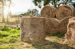 The foundation of the diet for all grazing animals
