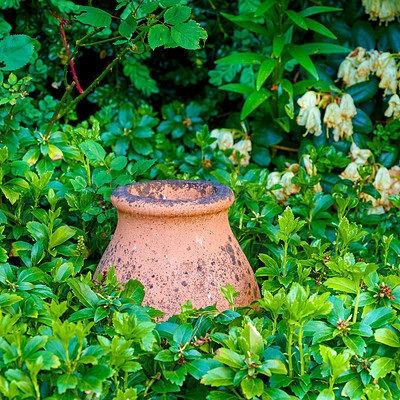 Buy stock photo Cropped shot of a well kept garden
