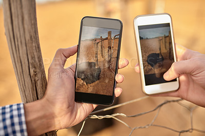Buy stock photo Cropped shot of two men taking pictures of ostriches with their smartphones on an ostrich farm