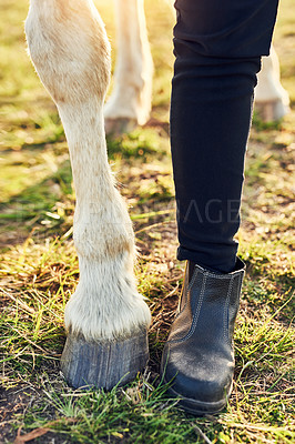 Buy stock photo Cropped shot of a woman standing next to her horse on a farm