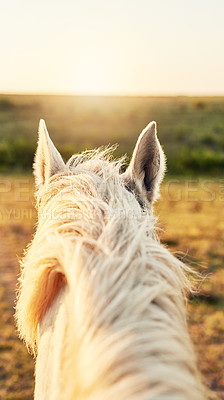 Buy stock photo Cropped shot of a white horse on a farm