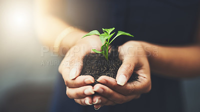 Buy stock photo Cropped shot of a woman holding a plant growing out of soil