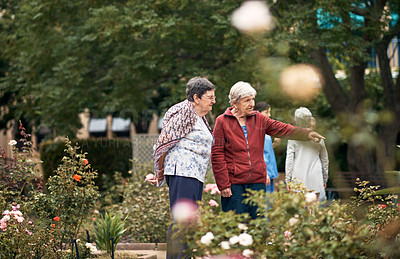 Buy stock photo Cropped shot of senior women looking at the plants while taking a walk in a garden