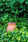 Clay pot in my garden