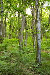 Danish forest in springtime