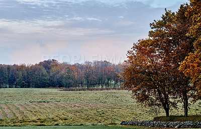 Buy stock photo A photo of a vibrant country field in early autumn
