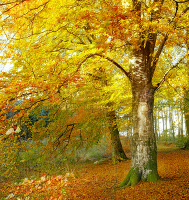 Buy stock photo A photo of the forest in the colors of autumn