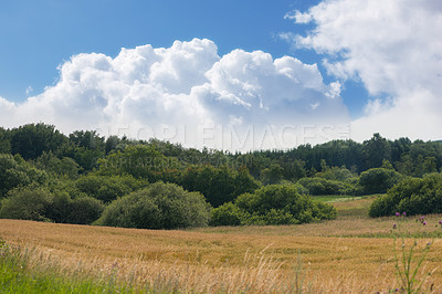 Buy stock photo A landscape photo of natural wilderness in Denmark