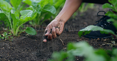 Buy stock photo Cropped shot of an unrecognizable male farmer checking this soil on his farm
