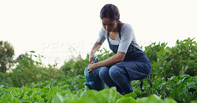 Buy stock photo Shot of an attractive young female farmer watering her crops on the farm