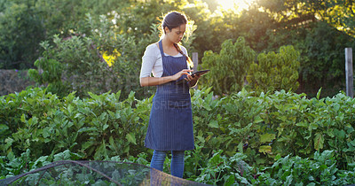 Buy stock photo Shot of an attractive young female farmer using a tablet while checking on the crops on the farm