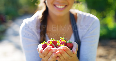 Buy stock photo Cropped shot of an unrecognizable young female farmer holding a bunch of strawberries while standing on her farm