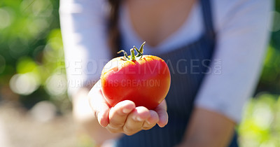 Buy stock photo Cropped portrait of an unrecognizable young female farmer holding a tomato while standing on her farm