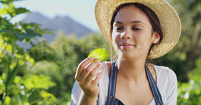 Buy stock photo Cropped shot of an attractive young female farmer checking on the plants on her farm