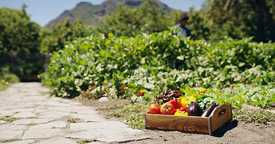 Buy stock photo Shot of a wooden crated packed full of vegetables on a farm