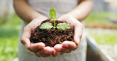 Buy stock photo Cropped shot of an unrecognizable female farmer holding a budding plant in soil while working on her farm