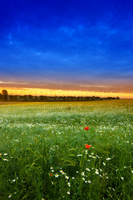 Buy stock photo A photo of sunset in the countryside