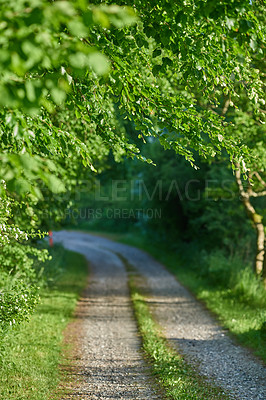 Buy stock photo Dirt road in the forest A photo of green and lush forest in springtime
