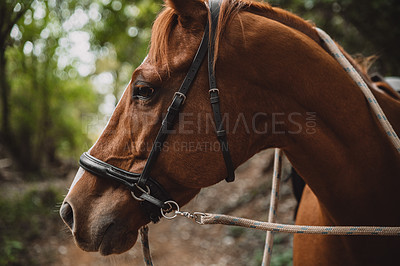 Buy stock photo Shot of a beautiful horse in a forest