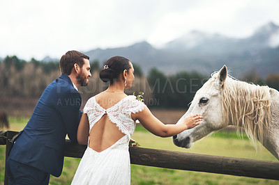 Buy stock photo Shot of a happy newlywed young couple petting a horse outside on their wedding day