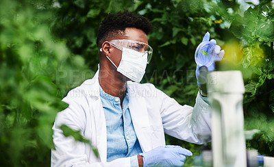 Buy stock photo Shot of a young botanist using a magnifying glass to look at a plant outdoors