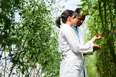 Buy stock photo Shot of two young botanists working and studying plants together outdoors in nature