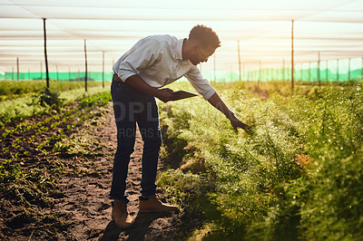 Buy stock photo Full length shot of a handsome young male farmer using a tablet while working on his farm