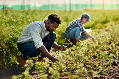 Buy stock photo Full length shot of a handsome young male farmer working on his farm with a female colleague in the background