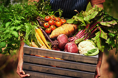 Buy stock photo Cropped shot of an unrecognizable female farmer holding a crate full of fresh produce at her farm