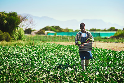Buy stock photo Full length shot of a young farmer walking and carrying a crate full of fresh produce at his farm