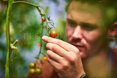 Buy stock photo Shot of a handsome young farmer looking at his growing crop of tomatoes in the fields at his farm