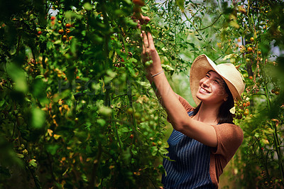 Buy stock photo Shot of an attractive young female farmer picking vegetables outdoors in the fields at her farm