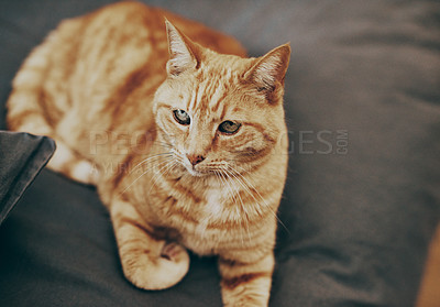 Buy stock photo Closeup shot of a ginger cat relaxing on a bed