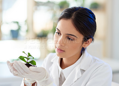 Buy stock photo Shot of a young scientist holding a plant in a lab