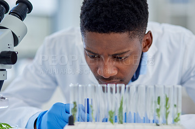 Buy stock photo Cropped shot of a focused young male scientist observing plant based test samples in vials while being seated inside of a laboratory during the day