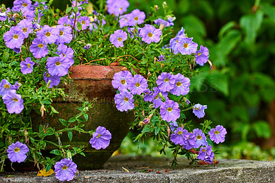 Buy stock photo A photo of beautiful purple flowers in springtime