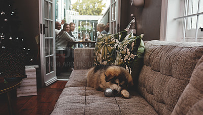 Buy stock photo Shot of a carefree little puppy chewing on a christmas decoration while lying on a sofa while the owners have dinner in the background at home during christmas time