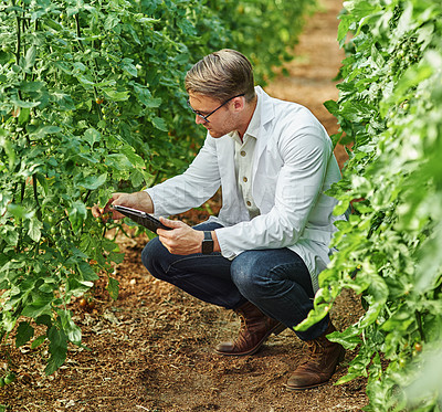 Buy stock photo Full length shot of a young scientist using a digital tablet while studying plants and crops outdoors on a farm