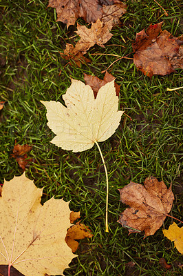 Buy stock photo Still life shot of leaves on the ground in autumn