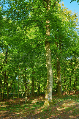 Buy stock photo A photo of green and lush forest