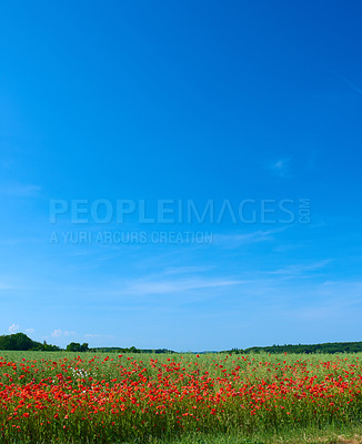 Buy stock photo A  photo of the countryside in early summer