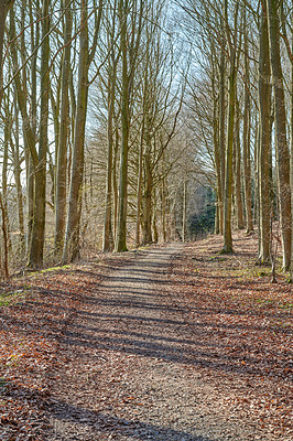 Buy stock photo The forest in late winter - early spring