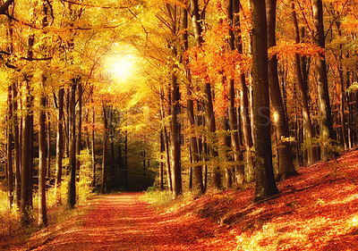 Buy stock photo The forest in autumn - colorful