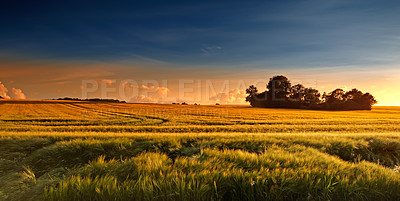 Buy stock photo Sunset in the countryside in late summer - lots of copyspace