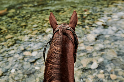 Buy stock photo Rearview shot of a horse strolling outdoors through a forest
