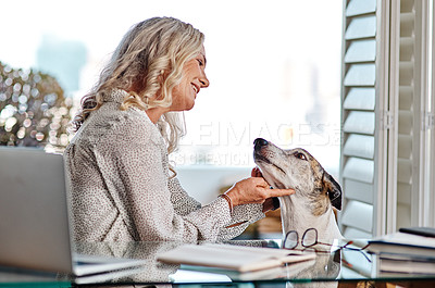 Buy stock photo Cropped shot of an attractive senior businesswoman playing with her dog while working from home