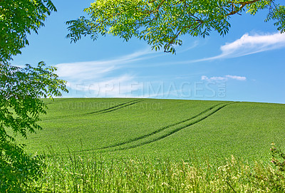 Buy stock photo Green fields and blue sky framed by trees - lots of copy space