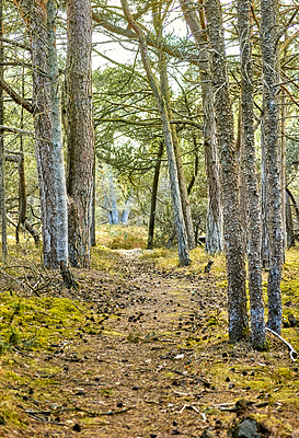 Buy stock photo Winter is leaving, springtime is coming  - nature photos from the Eastcost (Kattegat) of Denmark