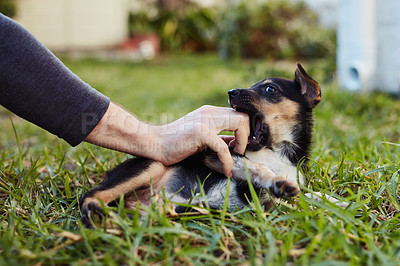 Buy stock photo Shot of an adorable little puppy bonding and getting petted by it's owner outside