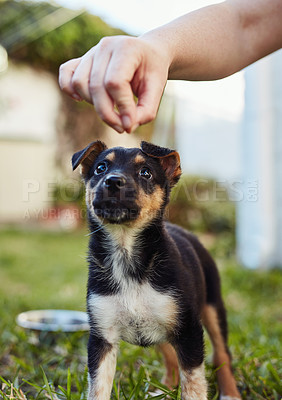 Buy stock photo Shot of an unrecognizable man playing with his little puppy outside